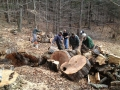 Firewood Work Party
